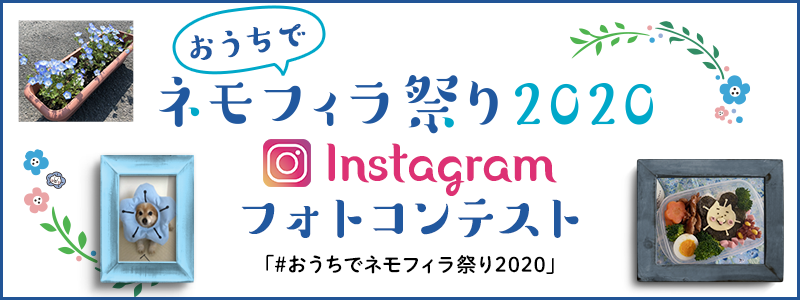 It is baby blue-eyes Festival 2020 Instagram photo contest in house